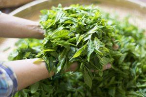 健一自然農園 茶葉